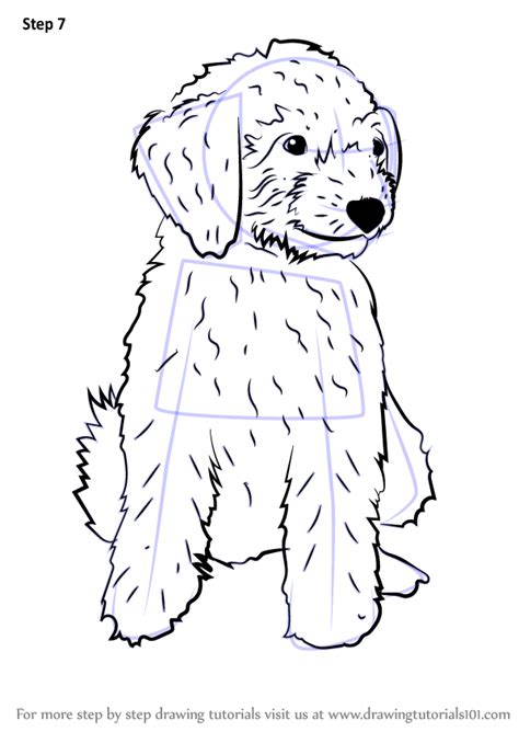 learn   draw  mini goldendoodle dogs step  step