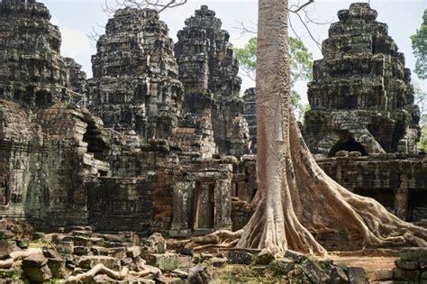 angkor wat temple  trees photo
