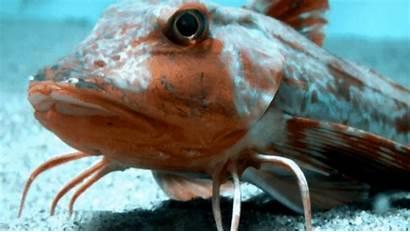 Fish Shrimp Legs Floor Crawl Sea Strangely