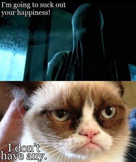 Grumpy Cat Good Meme - grumpy cat meme cute n funny animals pinterest