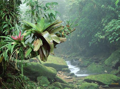 Rainforest Animals Wallpaper - tropical rainforest wallpapers wallpaper cave