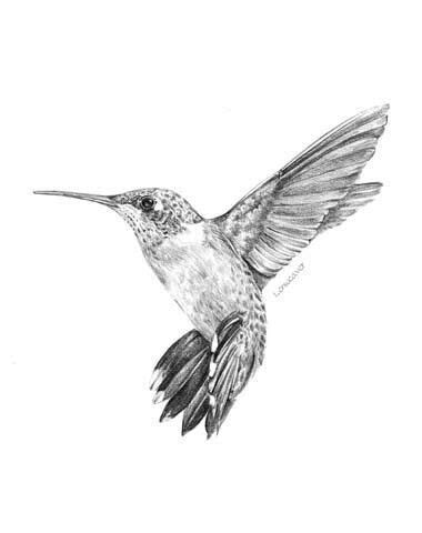Hummingbird with some green put in it | Hummingbird tattoo, Hummingbird tattoo black