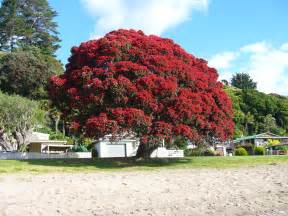 10 things i love about new zealand christmas tree kiwiana and scenery