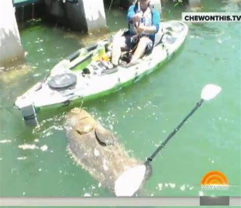 grouper goliath caught record kayak florida