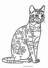 Coloring Cat Printable Cool2bkids sketch template