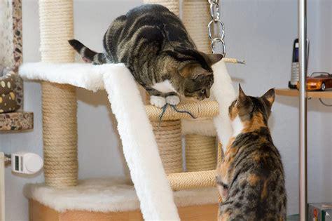 Katzen Wandbrett Selber Bauen by Kratzbaum Selbst Gebaut Bauanleitung Tueftler Und