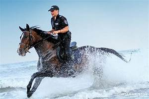 Police Horses Running In The Water