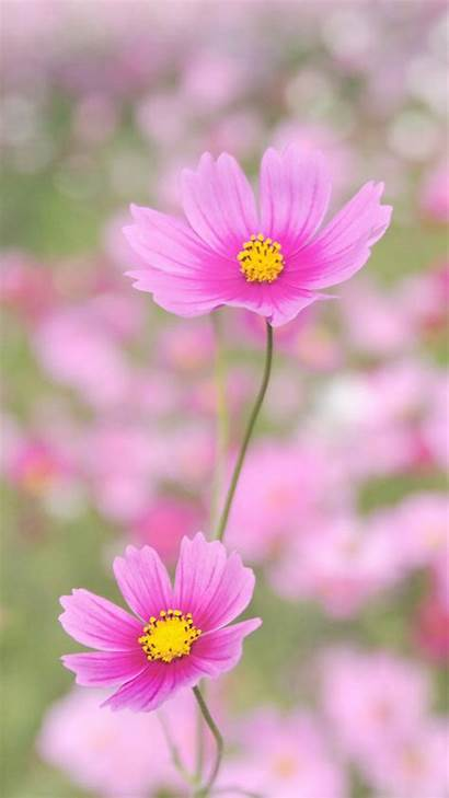 Iphone Flower Nature Wallpapers Backgrounds Happy Flowers