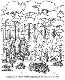 HD wallpapers coloring pages of rainforest trees