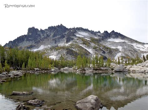 fishing alpine trout mountain lake lakes wilderness seattle pacific washington fly riptidefish hiking flies golden country