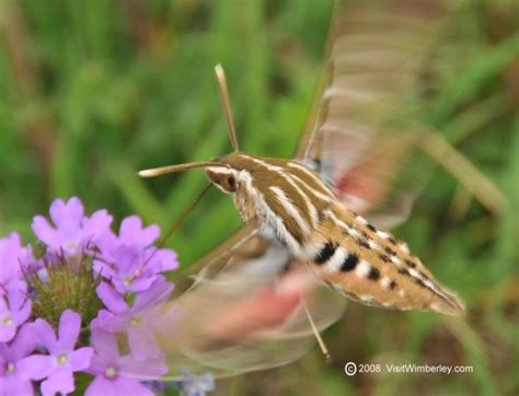 hill country critters on visitwimberley com