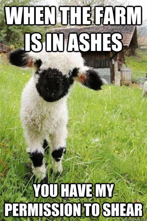 Sheep Memes - baby bane sheep memes quickmeme