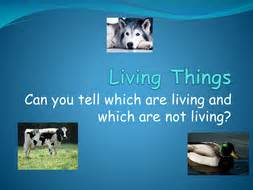 living and non living things powerpoint by misshunt teaching resources tes