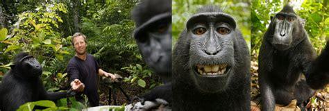 selfie monyet sulawesi bikin fotografer inggris kesal