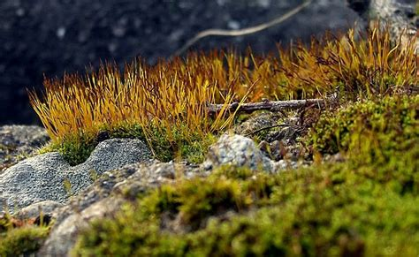 different types of moss different kinds of moss plant nature photos 15 june