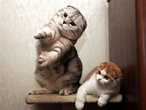 cats dancing   funny cat dance compilation youtube