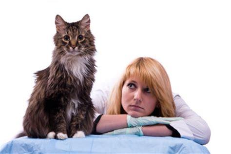 Nierenprobleme Katze Symptome