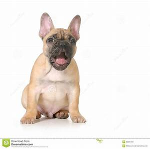Expressive Puppy Stock Photo - Image: 36201410