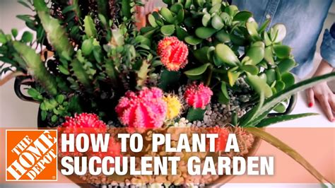 succulent container gardens tips  tricks youtube