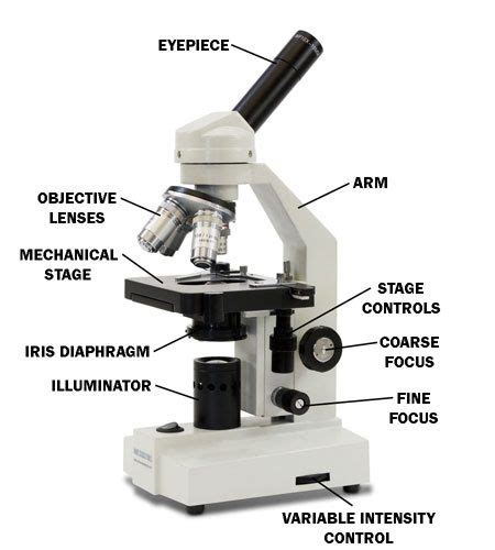 light microscope definition what does the coarse adjustment knob do on a microscope