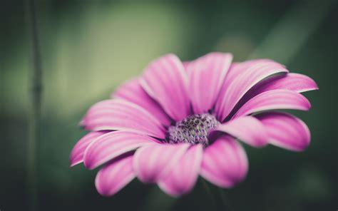 pink flower pink flower weneedfun