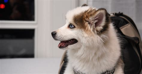 Test of pedigree law