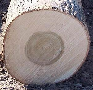 We have Pine logs,Beech Logs,Ash logs,Poplar logs,Birch