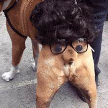 Funny Dog GIFs - Find & Share on GIPHY