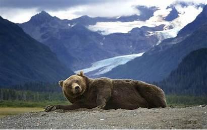 Alaska Screensaver Bear Grizzly Mountain Wallpapers Wallpapersafari