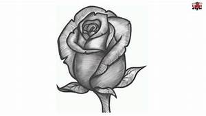 How to Draw a Realistic Rose Easy Step By Step Drawing ...