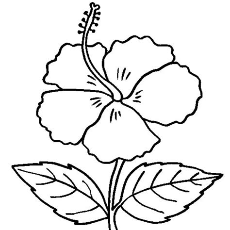 printable hibiscus coloring pages  kids