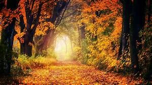 Download, Wallpaper, 2560x1440, Autumn, Park, Foliage, Trees