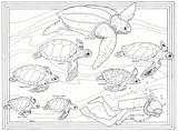 Turtle Coloring Sea Pages Turtles Animals Mommy Template Popular sketch template