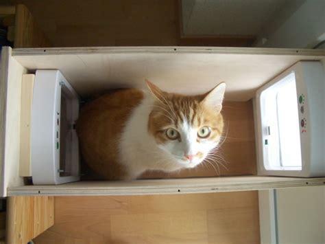 meow die katzenwelt von stitch sancho pooh sternchen