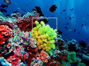 Bunte Unterwasserwelt als Leinwand von Malediven-Bild