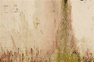 Flecken An Der Wand Ausbessern : gr ner schimmel in der wohnung so k nnen sie ihn beseitigen ~ Lizthompson.info Haus und Dekorationen
