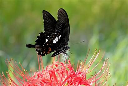 Zoom Nature Butterfly Close Insects Backgrounds Desktop