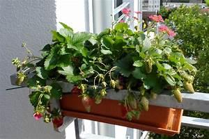 Pflanzen Für Gewächshaus : gew chshaus f r balkon berwintern hauptdesign ~ Whattoseeinmadrid.com Haus und Dekorationen