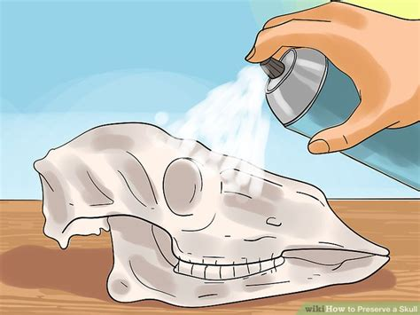 hog wire how to preserve a skull 9 steps with pictures wikihow