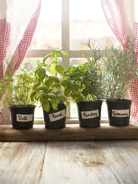 Plants In Windowsill by The 9 Best Houseplants For The Kitchen Inspiratin