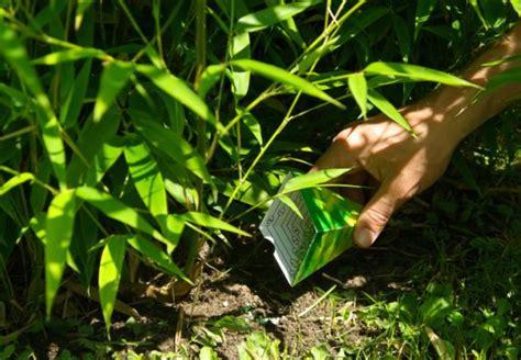 Garten Rat Pflanzen Vor Schuetzen by Blattl 228 Use Bek 228 Mpfen Und Pflanzen Sch 252 Tzen Mit Obi