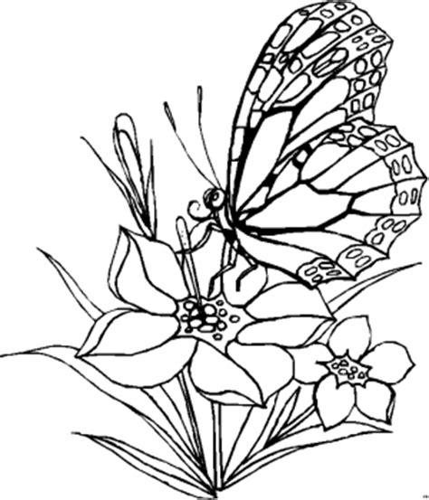 schmetterling frisst aus bluete ausmalbild malvorlage
