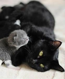 1000+ ideas about Newborn Kittens on Pinterest | Kittens ...