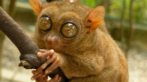 20 Animals So Ugly They're Cute