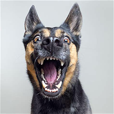 warm  inspiring dog portraits  alicja zmyslowska