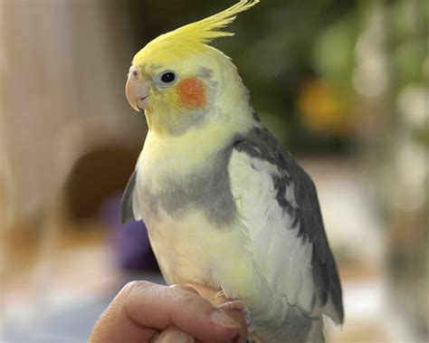 badezimmer teppiche papagei als haustier ist das eine gute oder eher