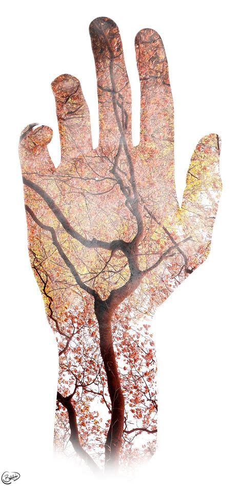 nature   veins double exposure tree  hand