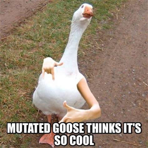 Goose Meme - meme creator mutated goose thinks it s so cool