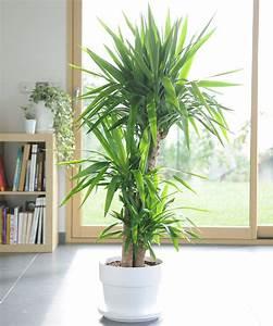 Plante Balcon Facile D Entretien : parlons un peu yucca c 39 est une plante facile d 39 entretien ~ Melissatoandfro.com Idées de Décoration