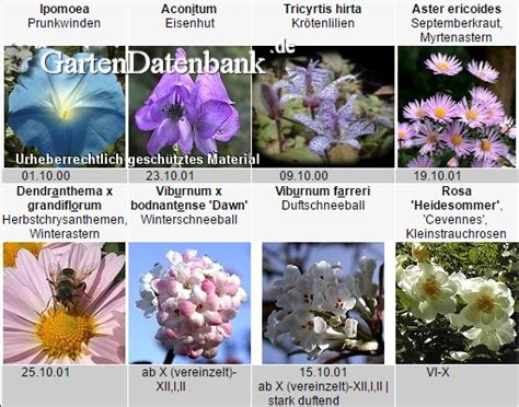 Pflanzen Im Oktober by Was Bl 252 Ht Im Oktober Voll Herbst Im Garten